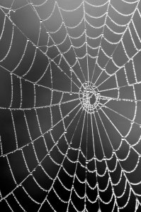 spiderweb_dew